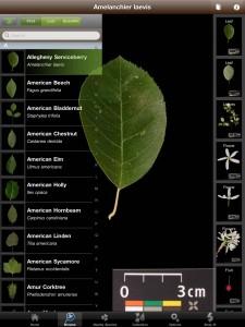 Leafsnap application tablette Enfant iPhone iPad La Souris Grise 2