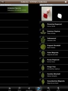 Leafsnap application tablette Enfant iPhone iPad La Souris Grise 4