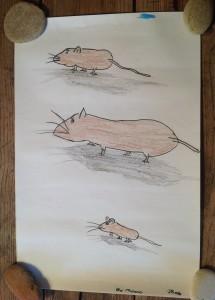 Les souris de Jacaranda 4