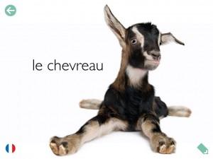 Parade mon imagier des animaux Etoiles éditions La Souris Grise 7