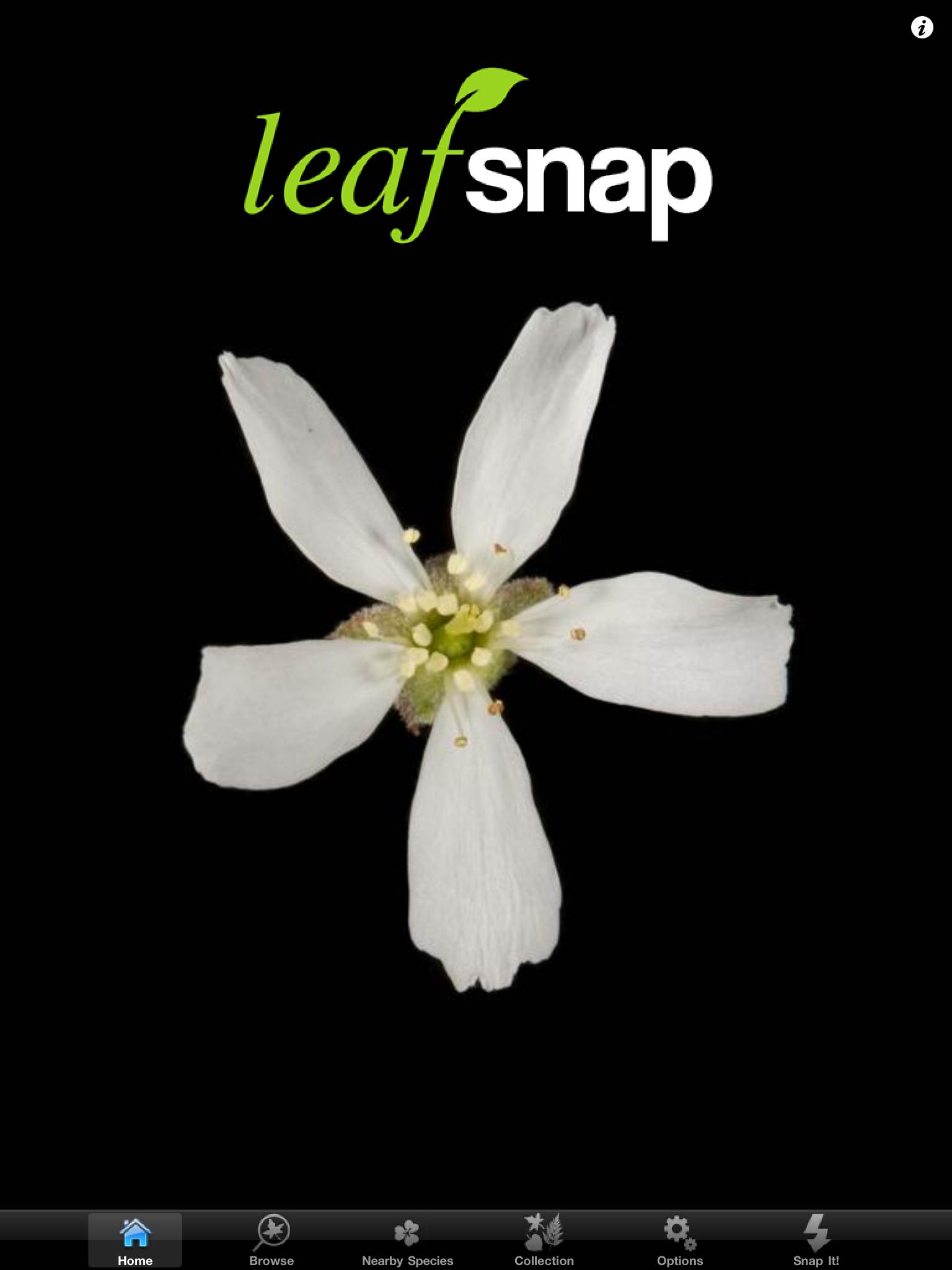 Leafsnap application tablette Enfant iPhone iPad La Souris Grise 1