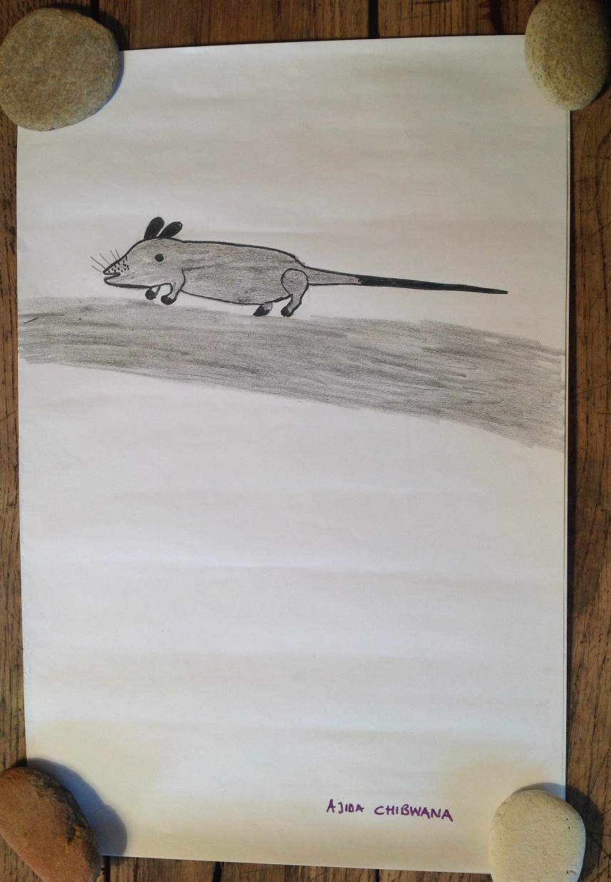 Les souris de Jacaranda 3